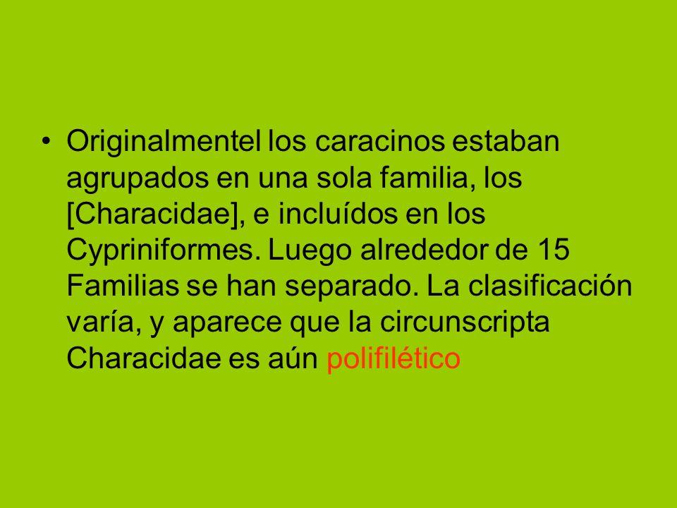 Originalmentel los caracinos estaban agrupados en una sola familia, los [Characidae], e incluídos en los Cypriniformes.